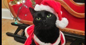 Los gatos llenan de ternura Instagram con su espíritu navideño