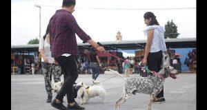 pasear-perros