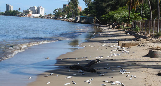 Estas son las 10 playas de México con mayor nivel de contaminación