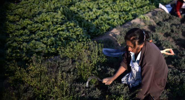 Gobierno estatal destina 200 mdp para seguro agropecuario de Puebla en 2019