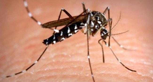 Secretaría de Salud moviliza a 560 servidores para combatir dengue