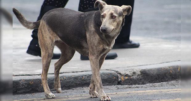 Perro mata a su dueña durante ataque epiléptico en Xicotepec