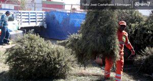 Abren centros para reciclar árboles de Navidad en Puebla capital
