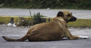 Gobierno estatal investiga denuncia de perro calcinado en Loma Bella