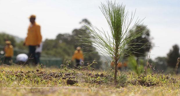 Plantarán árboles frutales y maderales en 50 mil hectáreas de Puebla