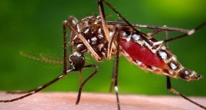 Van 11 casos confirmados de Chikungunya en ocho estados