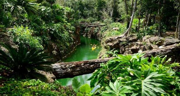 Amenaza de extinción de flora y fauna a un ritmo sin precedente: ONU