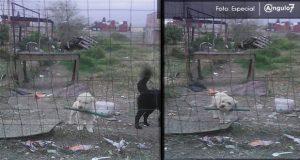 Se han emitido 8 sanciones en Puebla por maltrato animal: director