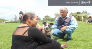 Mitofsky: 87% de mujeres y 76% de hombres en México tienen mascotas