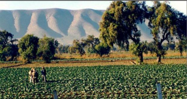Autoridades agrícolas de Puebla, sin acciones para prevenir trata de personas