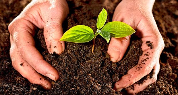 Semarnat urge cambiar modelo de agricultura que atenta contra vida