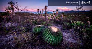 Biósfera de Tehuacán-Cuicatlán, patrimonio de la humanidad: Unesco