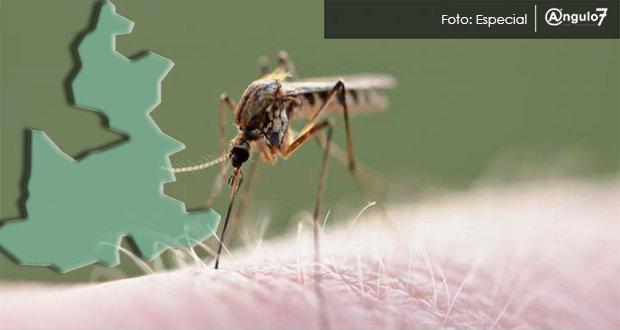 Puebla registra 505 casos de dengue, 84.3% más en un año: SS federal