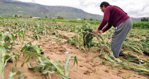 Gobierno destinó 266 mdp en seguros agropecuarios en 6 años, reporta Sdrsot