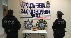 Policía federal halla oso con mariguana en aeropuerto de Puebla