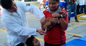 Ayuntamiento pone en marcha Semana de Vacunación Antirrábica
