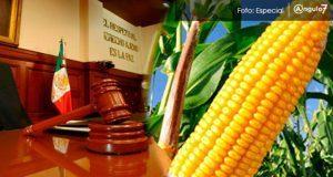 SCJN decidirá si empresas pueden sembrar maíz transgénico en México