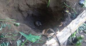 Van 33 cuerpos hallados en fosas de Nayarit
