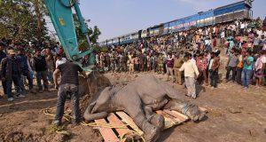 Tren arrolla manada de elefantes en la India