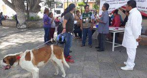 Vacunan y esterilizan mascotas en barrios de Tepexi de Rodríguez