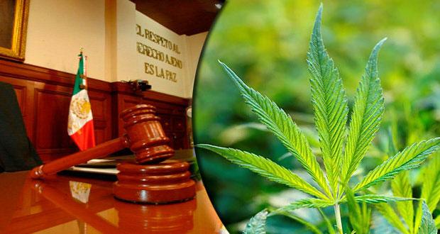 Otorga SCJN otro amparo para cultivar y consumir mariguana