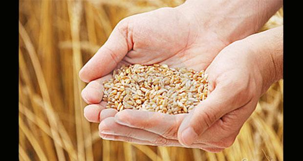 124 millones de personas, con inseguridad alimentaria: informe