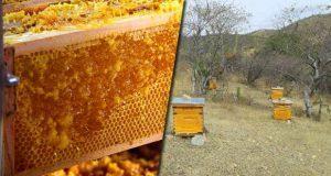 Puebla, octavo productor de miel de septiembre a diciembre de 2017