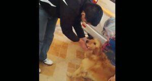 Perro aparentemente maltratado en video está bien: ayuntamiento