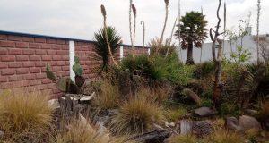 Asegura Profepa 61 plantas exóticas en gasolinera de Amozoc