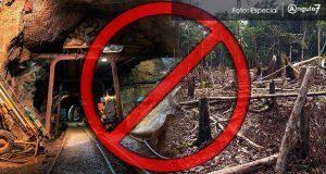 Desechan proyecto de mina que pretendía deforestar bosque en Juan Galindo