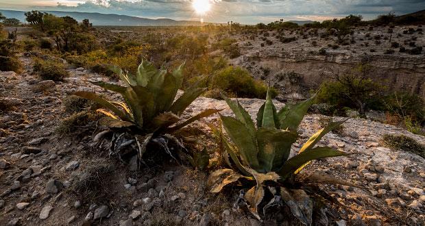 Valle de Tehuacán-Cuicatlán podría ser patrimonio mundial: Unesco