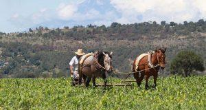 Canícula afecta 70% de tierras cultivables en Tlaxcala, señala CAP