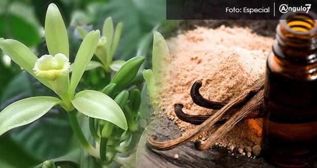 Por desinterés de agroindustrias, 90% de vainilla poblana se exporta, señalan