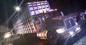 Policías recuperan camión con 90 cerdos propiedad de Granjas Carroll
