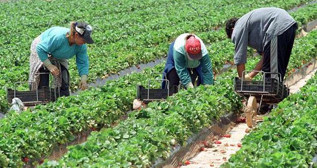 En el campo mexicano, apenas 3 de cada 10 jornaleras recibe salario