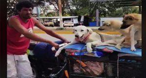 Un hombre en su triciclo recorre todo México rescatando perros