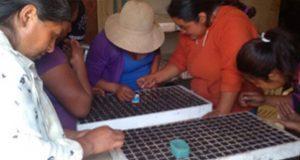 Buscan estrategias de cultivo para familias pobres en 3 estados