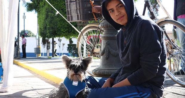 Esterilizan gratis a más de 200 perros y gatos en San Andrés Cholula