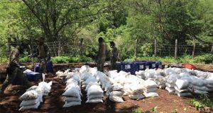 Aseguran 10 toneladas de cocaína y 1,200 litros de cristal en Sinaloa