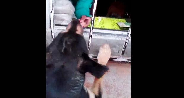 Le dan dinero a un perro y va a comprarse salchichas