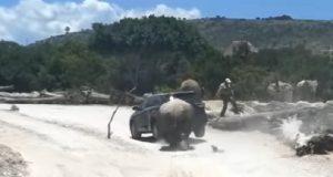 Exhiben a rinoceronte atacando camioneta en Africam Safari