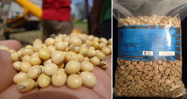 Sagarpa en Puebla alerta que semilla pirata daña cultivos