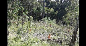 Regidor pide a Comuna de Cuautlancingo frenar tala de árboles en vivero