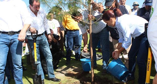 Gobierno estatal reforesta zona metropolitana con 50 mil árboles