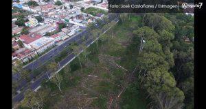 """Tala de árboles en """"El Vivero"""" sería por cambiar uso de suelo, alerta regidor"""