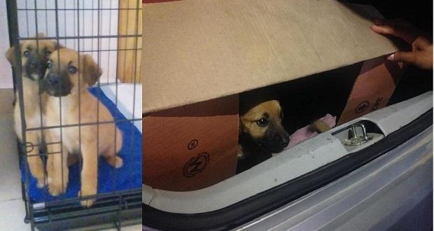 Por 1ª vez, procesan a una persona por maltrato animal en Puebla