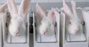 California prohíbe venta de cosméticos probados en animales