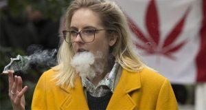 Legalización de marihuana en Canadá, no para a negocios clandestinos