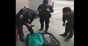 En 2 maletas abandonan 160 ejemplares de reptiles en la CAPU