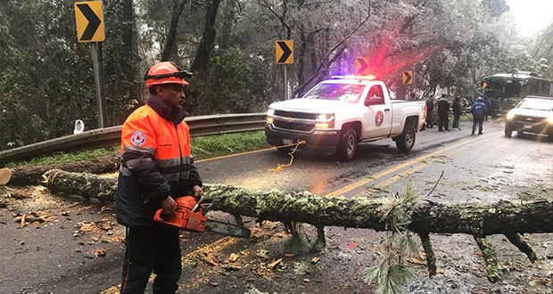 Heladas dañan más de mil árboles en Sierra Norte, advierte Conafor